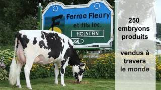 Lisamaree, finaliste au concours Vache de l'année