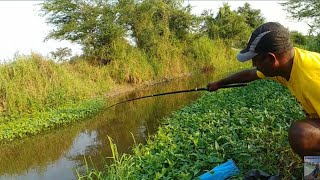 Fish hunting || Catching for tilapia & baam fish