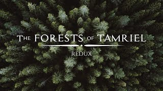 Jeremy Soule (Skyrim) — In The Forests of Tamriel (Redux) [Extended] (1 Hr.)