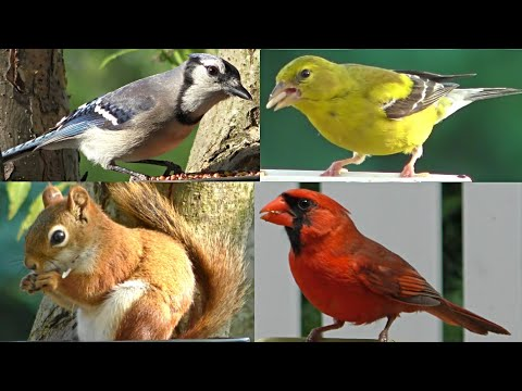 Little Birdies for Cats and Dogs to Watch in Full Screen 4k