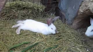 Кролики в яме 29 мая 2016 краткое содержание