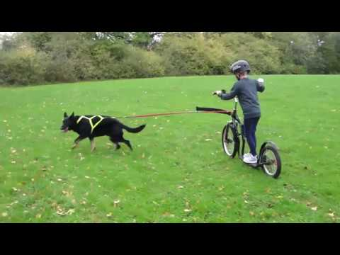 Training Your Dogs And Kids To Canicross, Scooter & Bikejor.