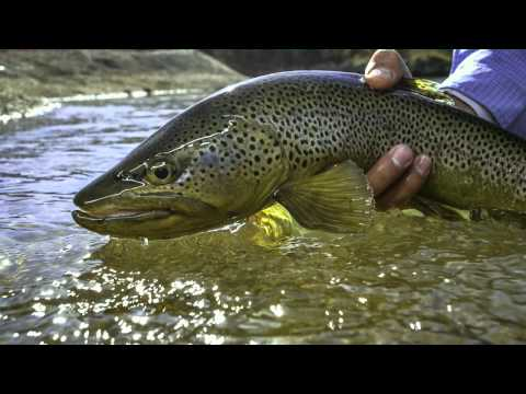 Green Envy - Fly Fishing Utah's Green River