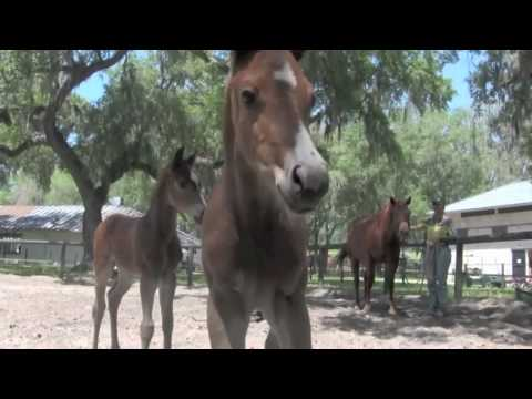 Parelli Foals Started Naturally  Horse Training