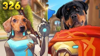Year of Doggo!! | Overwatch Daily Moments Ep. 326 (Funny and Random Moments)
