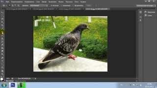 Занятие 8. Инструменты цветной ретуши изображений