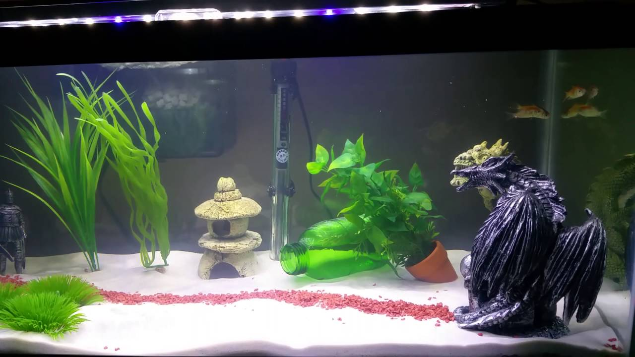 How to cycle a fish tank using fish youtube for How to cycle a fish tank