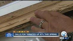 How often do you check for termites?