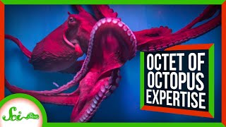 8 Incredible Things We Can Learn From Octopuses