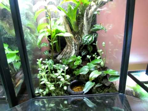 Some Plants And Frogs For Vertical Terrariums Youtube