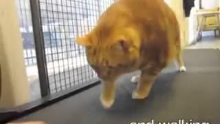 Кот похудел на 10кг