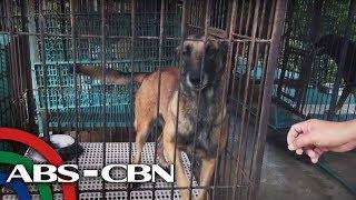 Bandila: Ilang retiradong K9 ng PDEA, naghahanap ng 'fur-ever' homes