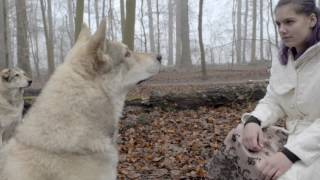 Our first official videoclip for the song the wolves. it's a sad bu...
