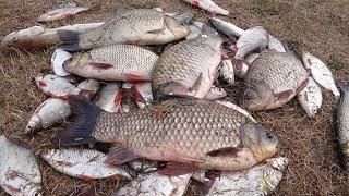 ОГРОМНЫЕ КАРАСИ ЛАПТИ Рыба мечты Крупная плотва Простая удочка выручает Рыбалка 2021