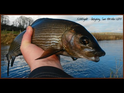 FishClyde - Grayling 09/11