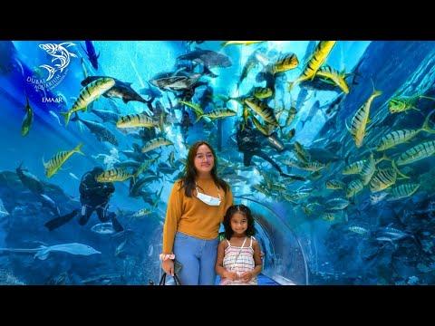 Dubai Aquarium and Underwater Zoo   Explore a Fascinating Aquatic World