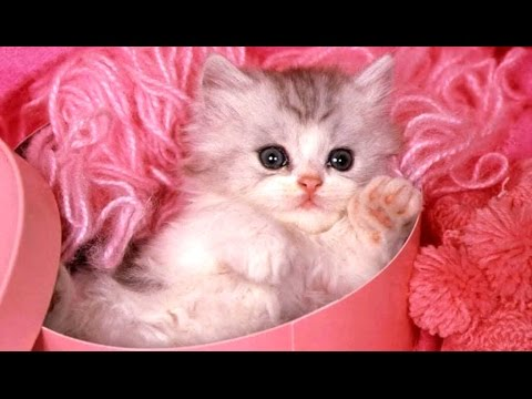 Cute Kittens - A Funny And Cute Kitten Videos Compilation 2017 [BEST OF]