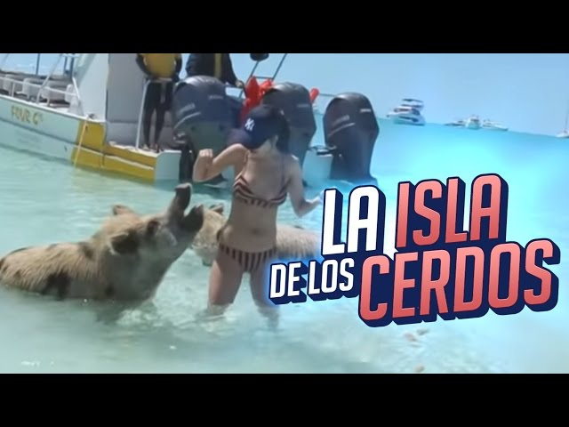 LAS BAHAMAS: LA ISLA DE LOS CERDOS #27