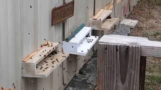 2018 Summer Solstice Shungite Beehives Swarm