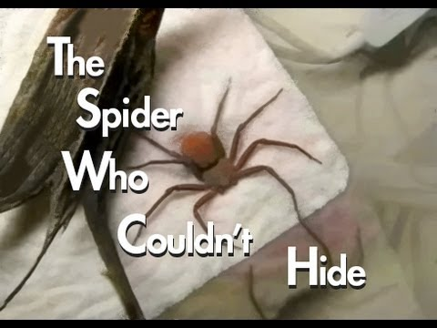 Video image: The spider who couldn't hide