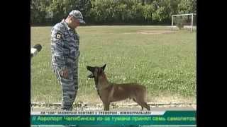 Команды по немецки и никакого сахара  Советы собаководам от опытных дрессировщиков