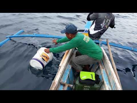 Fishing Spanish Mackerel ( Tanigue)