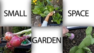 Small Space Garden - Ideas To Grow Plants In Apartments, Patios and Small Areas - in 4K