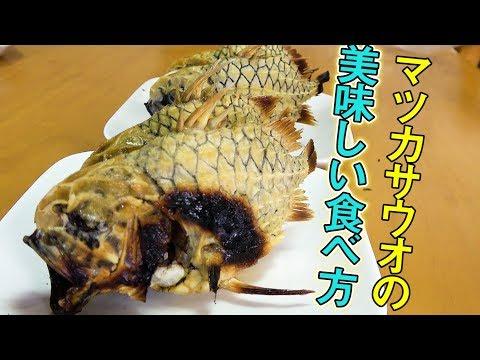 ヒゲの兄貴も絶賛!すんごく硬いけど美味しく食べる調理法!!【マツカサくん】