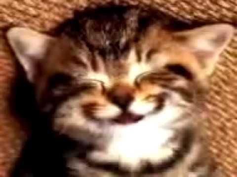 Alles Gute Zum Geburtstag Sagt Die Katze Youtube