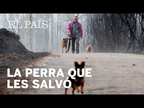 Incendios Galicia: la perra que salvó a sus dueños | España