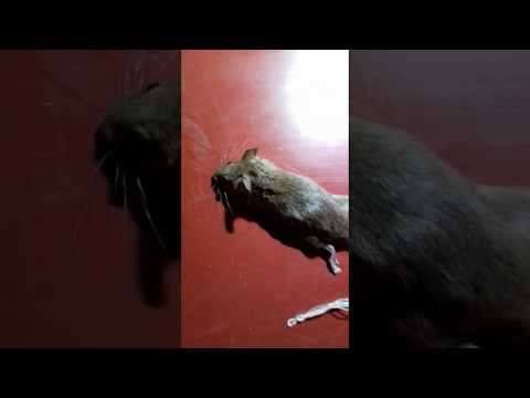 funny videos | funny animal video | funny pet videos | cute animals | cute puppy | cute puppy videos