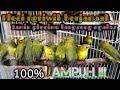 Pleci Ngriwik Berjamaah  Ampuh Bikin Plecimu Ngalas  Mp3 - Mp4 Download