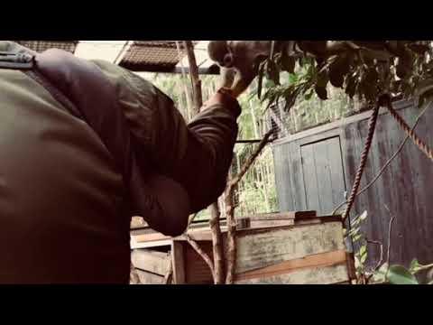 Things to do in Okinawa Japan 🇯🇵 The Botanical Garden