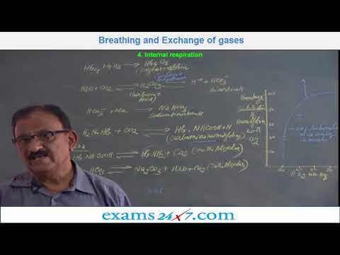 NEET BIOLOGY - BREATHING AND EXCHANGE OF GASES Video-11