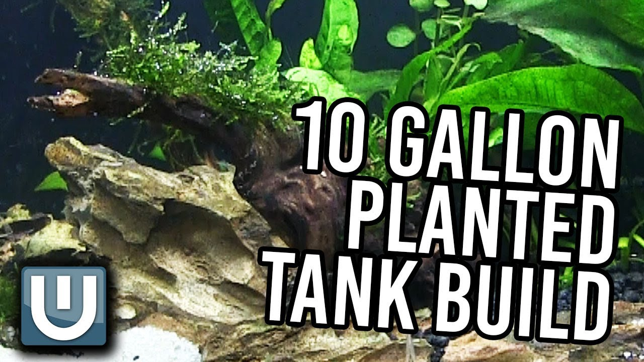 Download 10g Planted Tank Aquarium Build - YOU CAN DO THIS TOO!