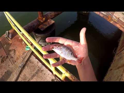 Multi-Species SALTWATER MICRO FISHING - Inshore Fishing - Trinidad, Caribbean