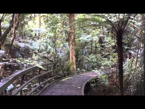 Kauri Forest Sounds with Maori Wooden Flute and Song