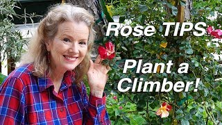 Planting a Climbing Rose   Rose Growing TIPS   Garden Workday Vlog