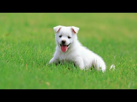 Funny Cute Dog baby And Got