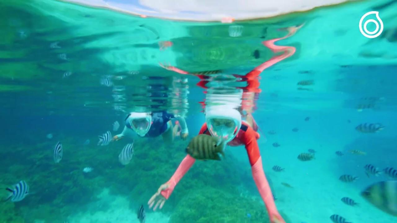 guetter qualité authentique prix raisonnable Masque Easybreath Junior (snorkeling avec des poissons tropicaux)