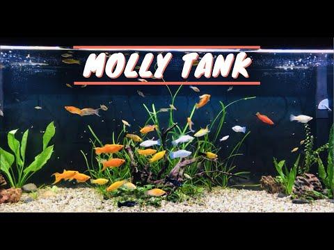 125 Gallon Molly Aquarium - Sailfin Mollies & Swordtails (UPDATE)