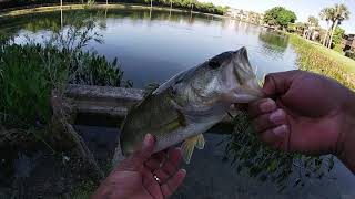 Who doesn't love fishing ponds?