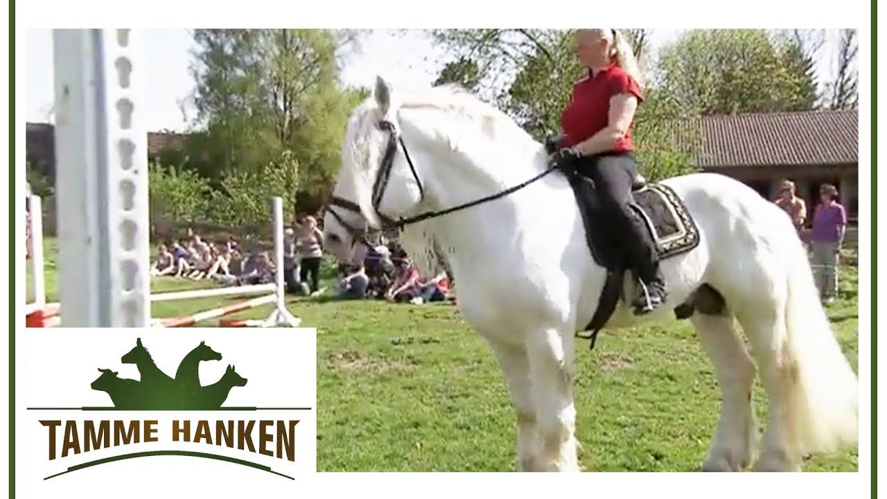 Warzen tamme mit hanken pferd Tamme Hankens