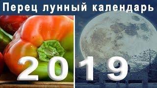 Лунный календарь огородника на 2019 год  Когда сажать рассаду перца в 2019 году
