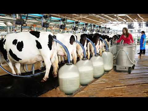 Automatic Cow Silage Feeding Smart Cowshed Hay Bale Farming New Technology Milking Transportation