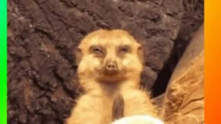 Забавное и смешное видео о животных для детей