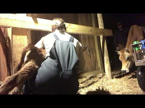 musical-montage-of-a-milking-mama---the-mac's