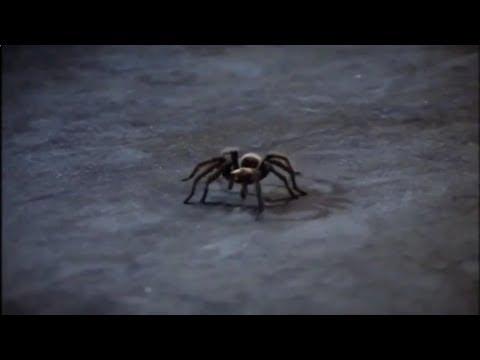 Фильм Смертельные тарантулы  фильм ужасов
