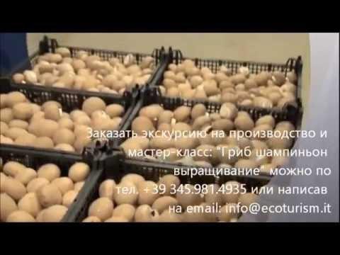 Тобольск - Администрация города - Официальный сайт