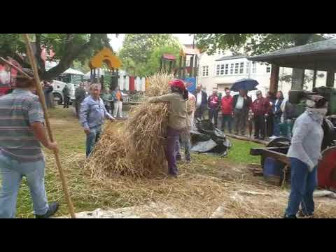 Festa da Malla en Castro de Rei